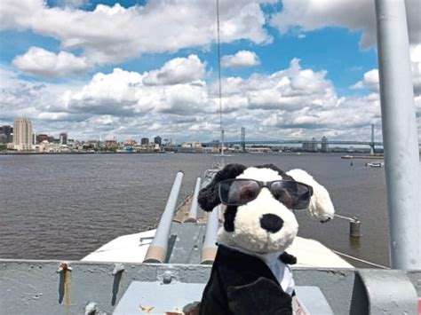 Jet-setting tail as dog travels 337,000 air miles for ...