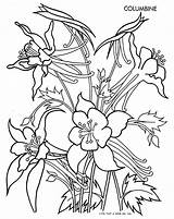 Columbine Flower Coloring Flowers Pages Drawing Pattern Drawings Tracing Easy February Quilter Template Sheets Books Spring Printable Adult Qisforquilter Patterns sketch template