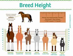 Horse Heights Explained Horse Breeds Horses Horse Care