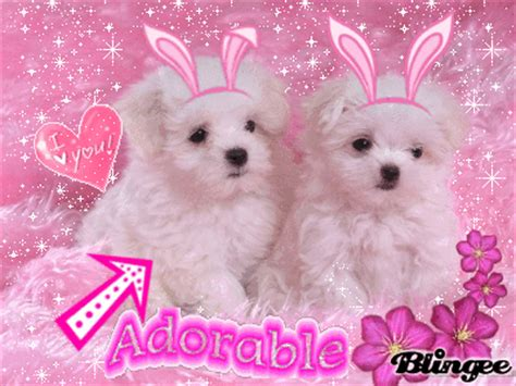perritos adorables picture  blingeecom