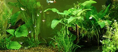 freshwater planted aquariums co2 systems for healthy planted aquariums