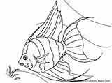 Fish Coloring Tropical Pages Realistic Angel Drawing Colouring Printable Angelfish Real Line Hawaiian Luau Drawings Sheet Aquarium Goldfish Outline Glass sketch template