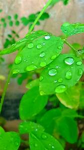 Green Leaf Plant With Water Droplets during Daytime · Free ...