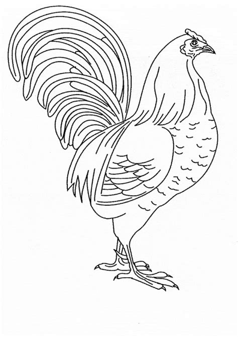 chicken coloring page animals town animals color sheet chicken  printable coloring