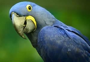 Exotic Birds – WeNeedFun