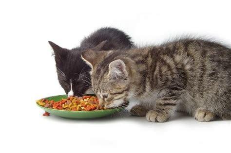 feeding  cat   budget