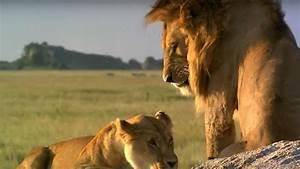 Wildlife In Serengeti