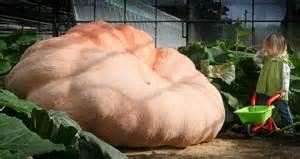 Heaviest Ever Pumpkin by Giant 1 600lb Pumpkin That Weighs More Than A Fiat 500