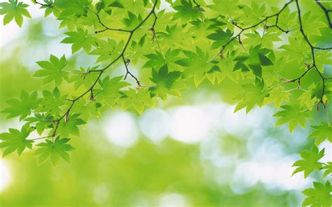 Background Greenery Wallpaper by Best Greenery Desktop Wallpapers Background Collection In