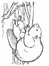 Beaver Coloring Pages Animal Printable sketch template