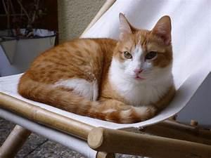 Weißer Wurm Katze : carni in n rnberg s rot wei er unfug kater ca 9 monate hunde gew hnt katzen forum ~ Markanthonyermac.com Haus und Dekorationen