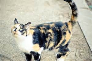 spotted cats spotted cat free photo smart photo stock