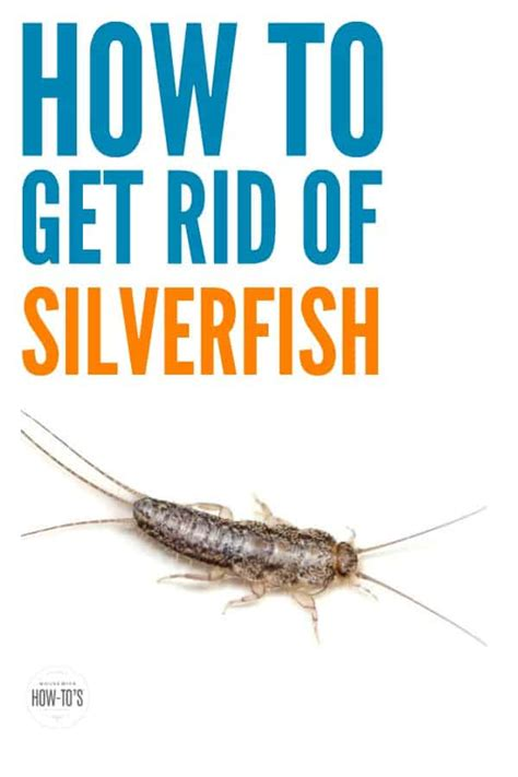 How To Get Rid Of Fishmoths In Cupboards by How To Get Rid Of Silverfish Naturally And Keep Them Away