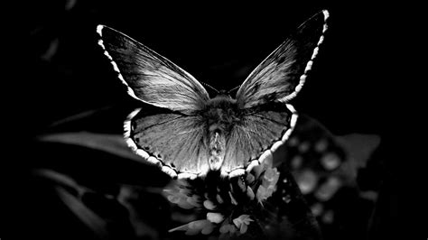 Beautiful Black Image by Black And White Images Of Butterflies 14 Desktop Wallpaper