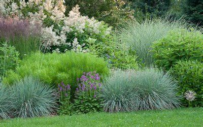 border grasses for landscaping semi circular border with persicaria blue oat grass stachys officinalis and a silly looking