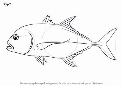 Trevally Giant Drawing Draw Step Fish Coloring