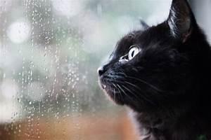 Türschutzgitter Mit Katzenklappe : treppenschutzgitter mit katzenklappe wissenswertes ~ Whattoseeinmadrid.com Haus und Dekorationen