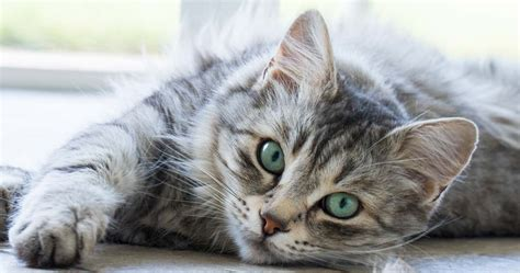 calm cat upset help cats ways calming down stressed care stay six many