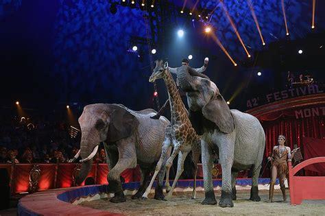 claims  animal cruelty   circus survive
