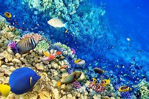 underwater world coral reef tropical fishes ocean ...