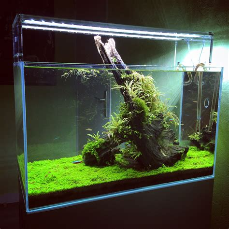 Aquascaping Planted Tank by Aquascaping Planted Tank Aquascaping Planted Tanks
