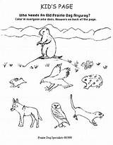 Coloring Prairie Dog Animals Habitat Malvorlagen Popular Drawings Designlooter Gemerkt sketch template
