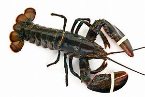 Buy Maine Lobster Online | Quick Lobster Delivery & Low ...