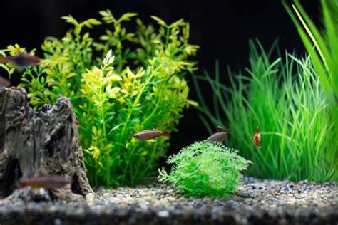 bien entretenir aquarium comment entretenir un aquarium conseils