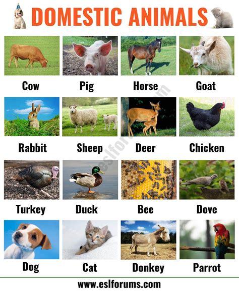 Farm Animals: List of 15+ Popular Farm/ Domestic Animals