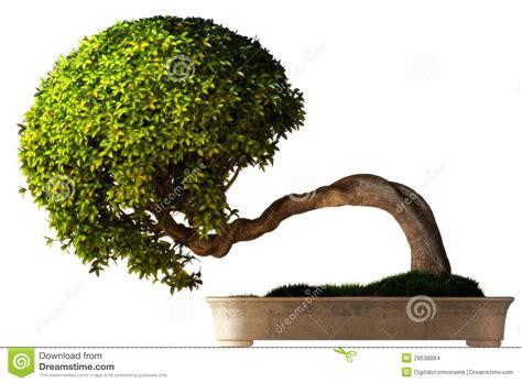 bonsai tree side view stock photo image  purple