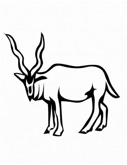Deer Coloring Pages Animal Animals Sheet Printable
