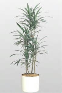 types of home interior design a plant affair llc los angeles leading interior plant
