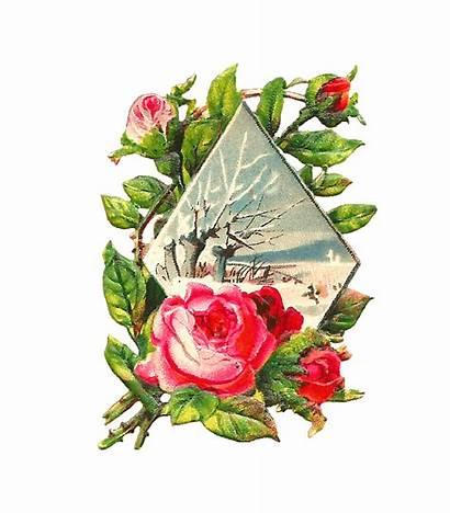 Winter Flower Rose Pink Clip Clipart Victorian