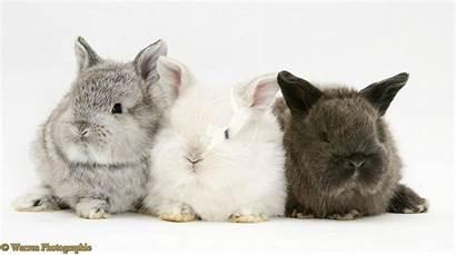 Bunnies Bunny Wallpapers Wallpapersafari Desktop Imagesci Animals