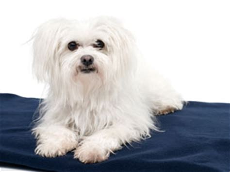 4 dogs which shed less boldsky com