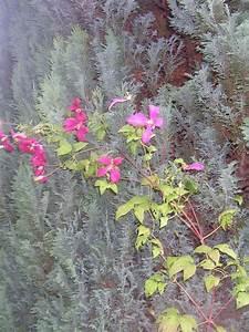 Was Kann Man In Ein Gewächshaus Pflanzen : was kann man unter scheinzypressen pflanzen pflanzen ~ Lizthompson.info Haus und Dekorationen