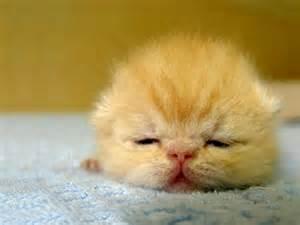 new about cat newborn kitten wallpaper