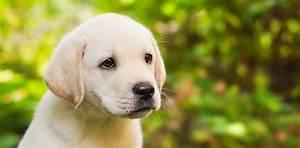 Bodenbelag Für Hunde Geeignet : f r kleine hunde masterfeed tierern hrung ~ Lizthompson.info Haus und Dekorationen