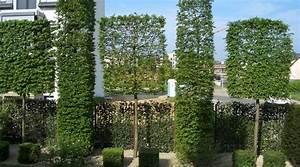 Grüner Sichtschutz Garten : spalierb ume die schwebende hecke moderner sichtschutz im garten ~ Markanthonyermac.com Haus und Dekorationen