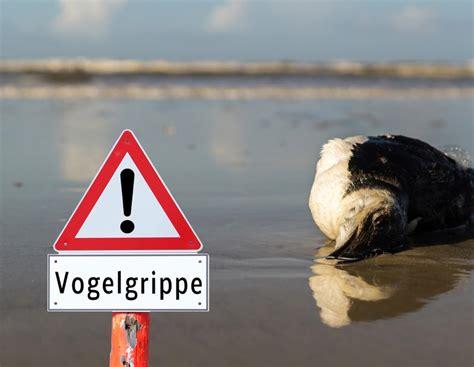 entstehung infektion massnahmen fakten zur vogelgrippe