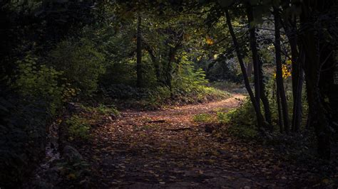 forest pathway wallpaper background hd wallpaper background
