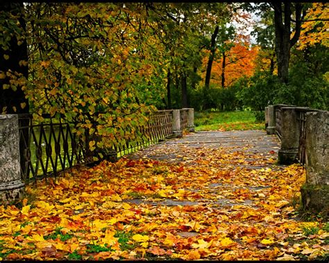 Autumn Wallpaper by Cool Pictures Wonderful Autumn Road Wallpapers