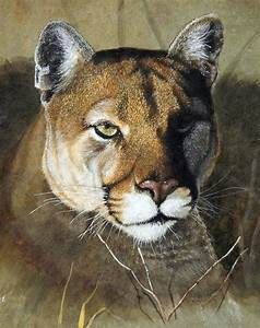 Related Keywords & Suggestions for mountain lion paintings