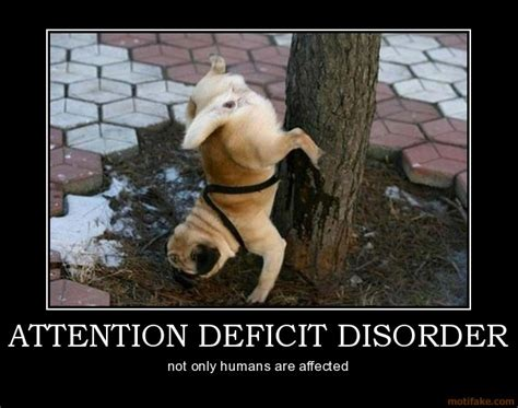 attention deficit disorder funny quotes quotesgram