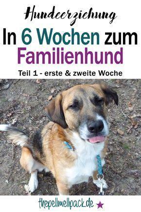 Glueckliche Haustiere Sauberkeit Und Erziehung by In 6 Wochen Zum Familienhund Teil 1 Unserer