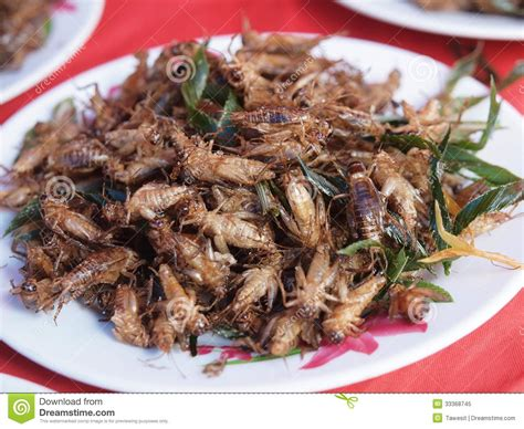 insecte cuisine dish of fried insects stock image image of crispy edible