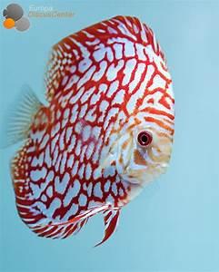 Best 25+ Salt water fish ideas only on Pinterest ...