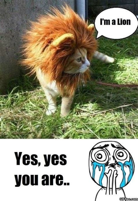 Yes You Are Meme - funny pictures blog com wp content uploads 2011 09 cute bunny jpg memes