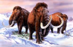 Woolly Mammoth Ice Age