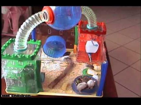 criceti gabbie 10 cuccioli criceti giocano in una divertentissima